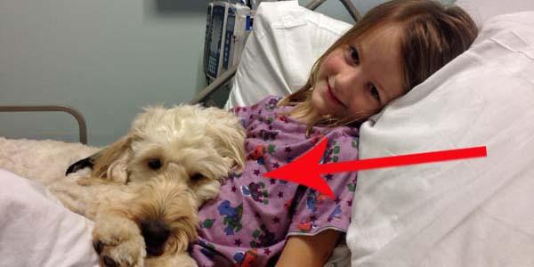 Uroczy pies chroni dziewczynkę przed zabójczą alergią!