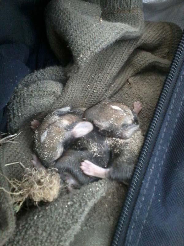 rabbit-rescue