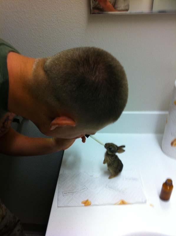 rabbit-rescue2