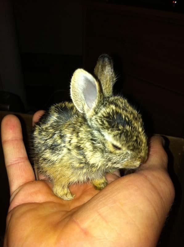 rabbit-rescue3