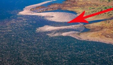 Nie zgadniesz, co pływa po wodzie… Przyjrzyj się uważnie… bliżej… jeszcze bliżej… CO to takiego?!