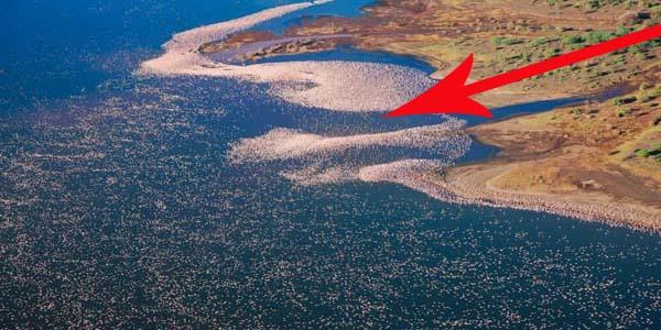 Nie zgadniesz, co pływa po wodzie... Przyjrzyj się uważnie... bliżej... jeszcze bliżej... CO to takiego?!