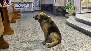Ten pies codziennie chodzi do kościoła. Kiedy dowiedziałam się, dlaczego, nie mogłam opanować łez wzruszenia…