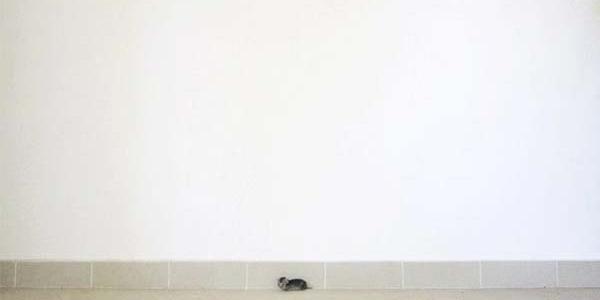 Myśleli, że znaleźli małą myszkę! Prawda była zupełnie inna! To zwierzę potrzebowało natychmiastowej pomocy!