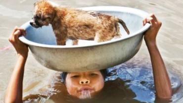Ludzie i zwierzęta potrzebują się nawzajem! Te niesamowite zdjęcia są na to dowodem!