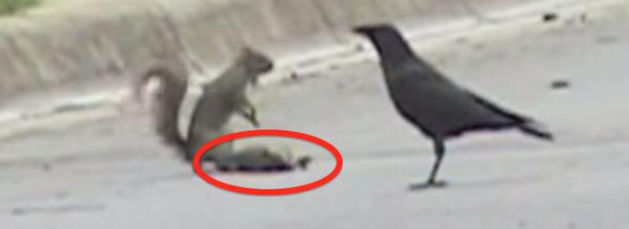 Prawdziwa przyjaźń istnieje także w świecie zwierząt! To, co robi ta wiewiórka, wyciska łzy z oczu...