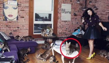 Miłośnicy kotów będą zachwyceni, oglądając te zdjęcia!