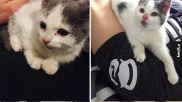 Zwierzęta ze schroniska przed i po adopcji