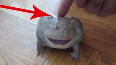 Reakcja tej żaby na dotyk człowieka rozbawiła mnie do łez! Zobaczcie zresztą sami :)