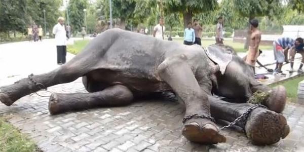 Ten słoń został uratowany po 50 latach ciężkiej niewoli. W momencie uwolnienia w jego oczach pojawiły się łzy...