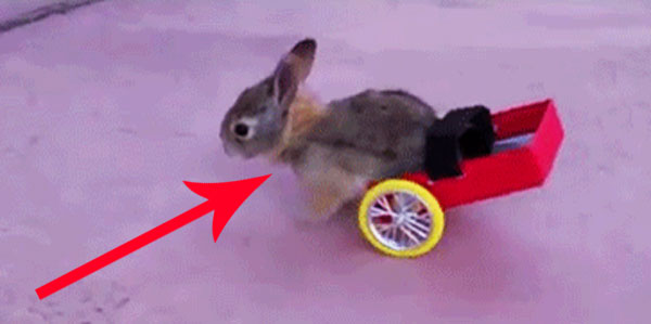 Niepełnosprawnym zwierzętom też można pomóc! Czasem tak niewiele trzeba, aby ułatwić im życie!