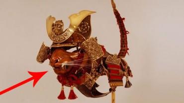 Lękasz się o bezpieczeństwo swojego kota? Dobrym pomysłem może okazać się kocia zbroja.