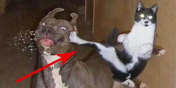 Koty-Ninja, które opanowały w stopniu mistrzowskim starożytną sztukę ninjutsu!