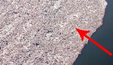 To gigantyczne skupisko ciągle unosi się na jeziorze Spirit Lake! Nie daje zapomnieć o tragedii, która miała miejsce ponad 30 lat temu!