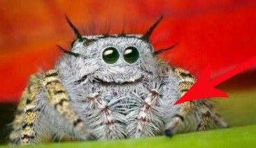 Nie lubisz pająków i ciem? Zobacz takie, z którymi chętnie byś się zaprzyjaźnił. To nie żart, przekonaj się sam!