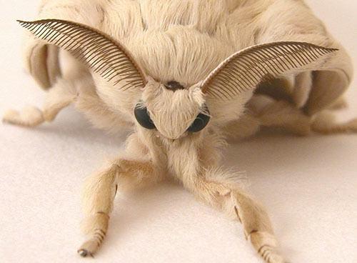 hairybug-1
