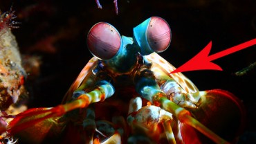 Niesamowite podwodne stworzenia sfotografowane w Indonezji. Trudno uwierzyć, że naprawdę istnieją!