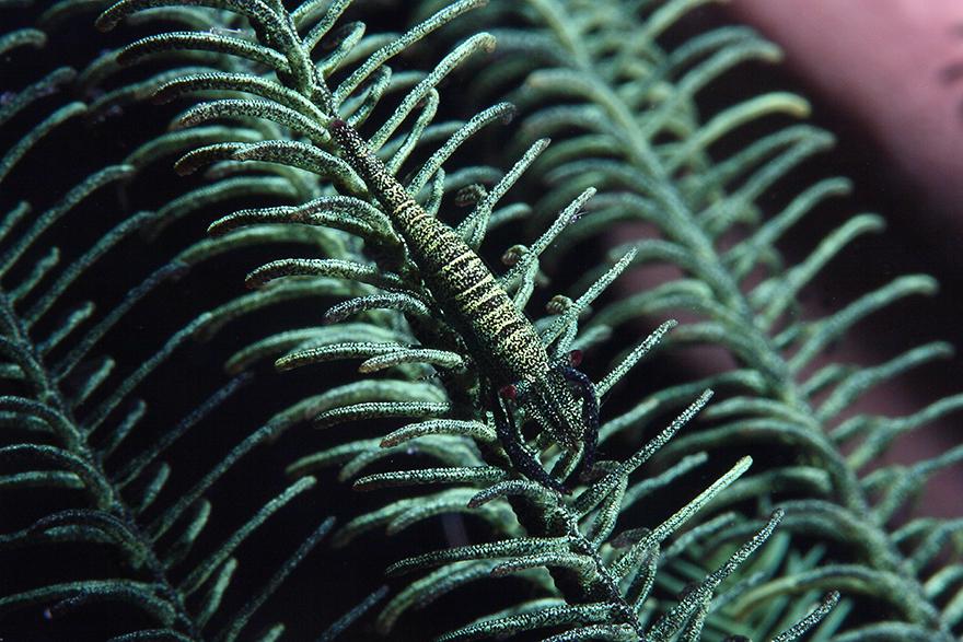 Amazing-Underwater-Weird-Creatures38__880