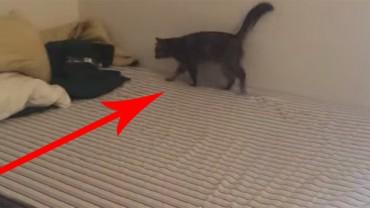 Mężczyzna potajemnie filmował swojego szalonego kota. Efekty jego pracy rozbawią Cię do łez!