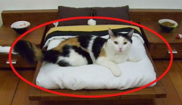 Te koty żyją na bogato. Sprawdź, do czego potrafią skłonić swoich właścicieli.