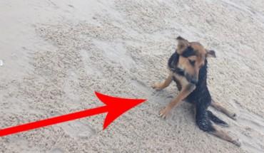 Znalazła tego rannego psa na plaży w czasie wakacji. Potem zdecydowała się na śmiały krok. Jestem pod wrażeniem!