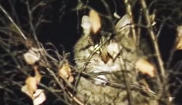 Ściągałeś kiedyś kota z wysokiego drzewa? Zobacz, jak robi się to w Rosji!