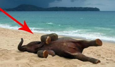 To małe słoniątko po raz pierwszy w życiu zobaczyło plażę. Jego reakcja jest niesamowita! :)