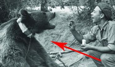 Poznaj historię Wojtka, pierwszego niedźwiedzia-artylerzysty w polskiej armii.