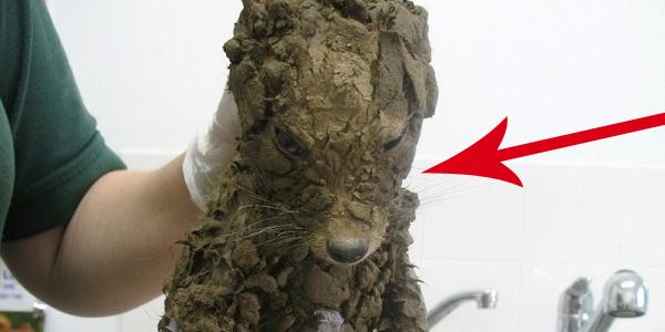 Uratowali tego malucha, kiedy tonął w błocie. Potem go wykąpali... Zobacz, jakiego zwierzaka wyciągnęli z tarapatów!