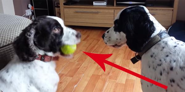Ukradła ulubioną zabawkę swojego brata. Jego reakcja? Do teraz nie mogę przestać się z niej śmiać!