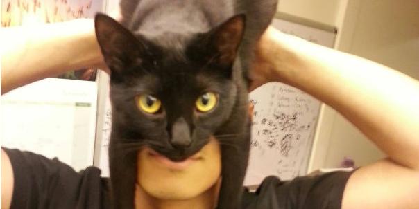 Ludzie noszą koty jak kapelusze. Zobacz najnowszy trend w Internecie!