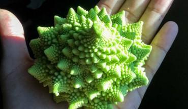 Chociaż wygląda jak z innej planety, w rzeczywistości jest całkowicie jadalne! Zobaczcie jedno z najdziwniejszych warzyw na świecie!
