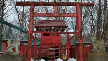 Niesamowite zwierzęce sanktuarium w Japonii. Sprawdź, co zamieszkuje w jego granicach!