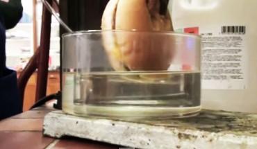 Postanowiono umieścić cheeseburgera z McDonald's w kwasie solnym… Wynik eksperymentu jest szokujący!