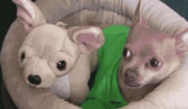Te obrazki sprawią, że będziecie się uśmiechać się od ucha do ucha! Zobaczcie najśmieszniejsze gify z udziałem zwierząt!
