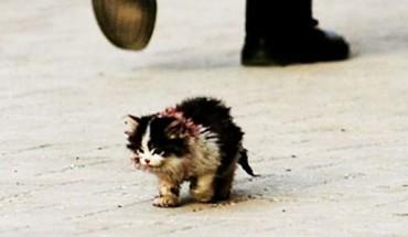 Nikt nie odważył się dotknąć tego kota… Wtedy on wziął go w ramiona… To, co wydarzyło się później, ściska za serce!