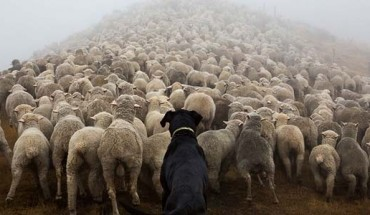 Nie tylko ludzie ciężko pracują. Zobacz psy, które odpowiadają za życie i zdrowie innych!