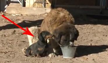 Ten pies zrobił coś niezwykłego, żeby uratować swojego przyjaciela. To niewiarygodne!