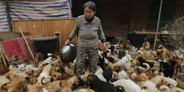 Opieka nad psem to nie tylko radość, lecz również ogromna odpowiedzialność. Pewna Chinka wie o tym aż za dobrze.