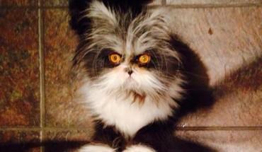 Zobacz kota, który wygląda jakby miał ochotę pożreć twoją duszę!