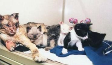 By ratować swoje kocięta, matka pięć razy przeszła przez płomienie. Zobacz, jak skończyła się jej historia!