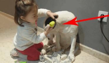 Dwuletnia pani doktor bada swojego pacjenta. Jego reakcja wprawiła mnie w osłupienie. Co za pies!