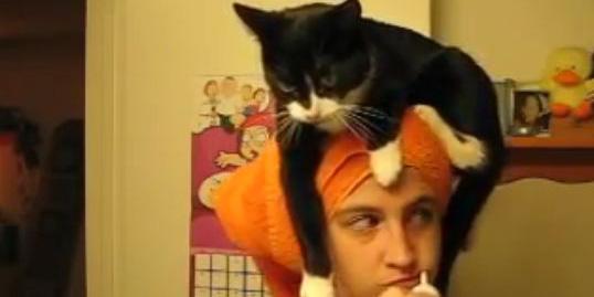 Ten kot towarzyszy swojej Pani nawet przy porannej toalecie.
