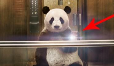 Zagrożone gatunki robią sobie selfie! Zobaczcie niezwykłą kampanię, która zmusza do myślenia!