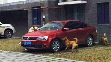 Bezpański pies postanowił dać nauczkę człowiekowi, który go kopnął! Z pomocą przyszłą mu grupa przyjaciół!