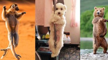 Te zwierzęta potrafią tańczyć! Nie wierzysz? Przekonaj się sam!