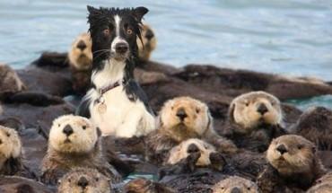 14 zwierzaków, które zapomniały, do jakiego gatunku należą. Ostatni jest genialny!