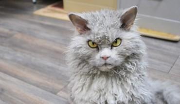 Poznaj Alberta, kota z demonicznym wyrazem pyszczka.
