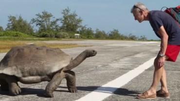 Wkurzony żółw zdolny jest do wszystkiego… poza biegiem. Oto najwolniejszy pościg w historii świata zwierząt.