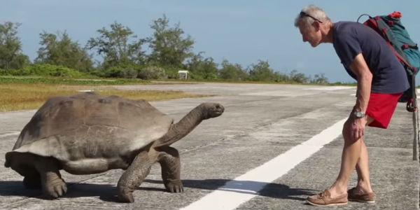 Wkurzony żółw zdolny jest do wszystkiego... poza biegiem. Oto najwolniejszy pościg w historii świata zwierząt.